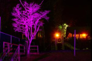 Day 61: The Purple Tree by alex10819