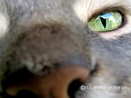 I see you by Renay89