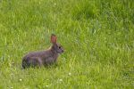 Bunny IMG 2782 by organblower