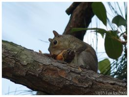 Squirrel and Pinecone 2 by texasghost