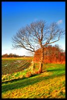 Lonely Tree - HDR by simoner