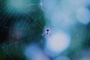 The itsy bitsy spider 01 by violetic