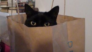 Hiding in a paper bag by Eddiethmator