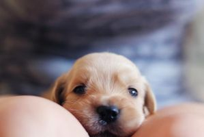 oh puppy by emmabrus