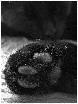 Most precious paw in the world by AnnaStarostina