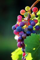 Tilt Shift Grapes by Khaosprinz