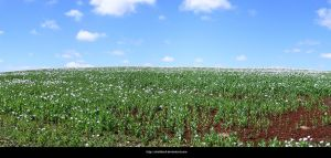 Field Panorama 2 by shelldevil