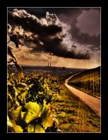 Vineyard by SteOS