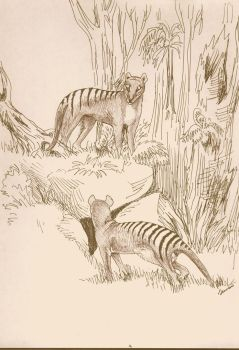 Thylacines by jennarotancrede