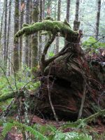 Woodland Stump by Whimseystock