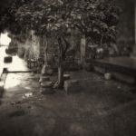 The south the rainy season. by lwc71