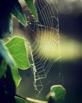 Spider Web and Ivy by JaneWolfskin