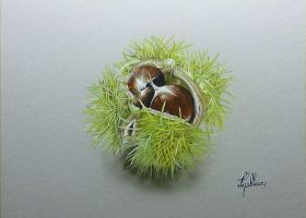 dessin hyperrealist chestnut by personnedali