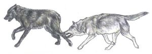 Wolves - Harassing by Ara-Tun
