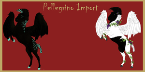 Pellegrino Import for MapleBrookeStable by LiaLithiumTM