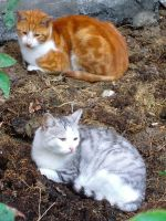 My Stray Cats 1 by selfregion