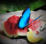 Butterfly Eating by eyannaandkianalovesu