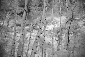 IR Aspen by GambllingYouth