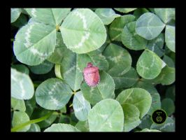 Clover and Bug by Ranger-Roger-Reserve