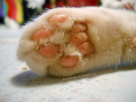 Toebeans of a travelling princess kitty 2 by RyoSchrader