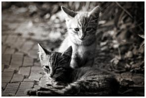 Cats by Athaline