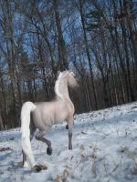 A Snowy Trot by sarahrosehorse