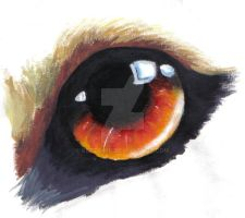 wolf eye by Kezzamin