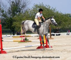 Warmblood 26 by EquineStockImagery