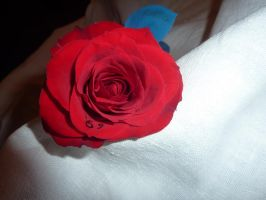 Red Rose by Lizardhound