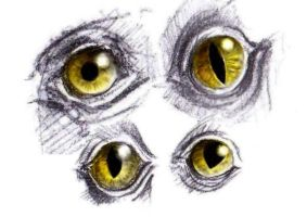 Theropod's eyes by Chimerum