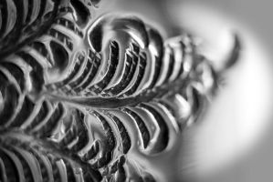 Silver Detail by ARC-Photographic