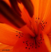Orange by youngbeth