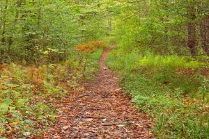 Dolly Sods Wildlife Forest Trail by somadjinn