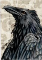 Raven ACEO (sold) by Khezix