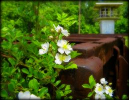 Flowers At Old Prison by AudraMBlackburnsArt