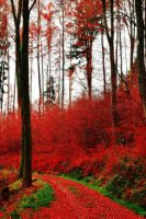 Red Woods by Aenea-Jones