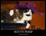 Demotivational: Kitty Pimp by Kundendienst