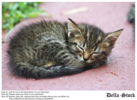 Sleeping Kitten by Della-Stock