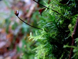 Seed moss by Mado29