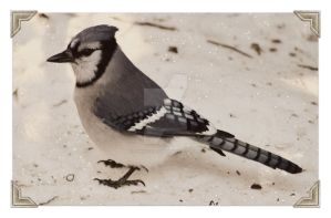 Avian Postcards from Under the Cedar Hedges by donnatello129