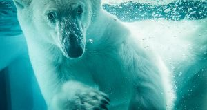 Polar Bear by DejanPelzel