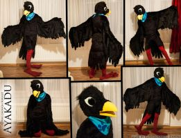 Ayakadu the alpine chough (Fursuit) by Alpendohle222