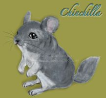 Poll Winner...Chinchilla by SilverSugar
