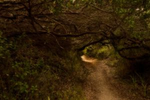 Enchanted woods by Dryad-8