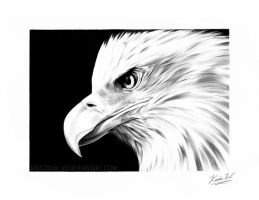 Bald Eagle by Spectrum-VII