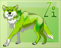 Gift : Zi by Nylak