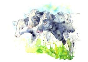 Dairy Cows VI by amwah