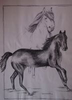 Horses by DiDi-S