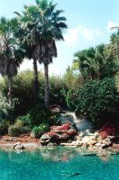 tropical gardens at seaworld by peaceocake