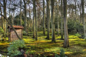 Clingendael Japanese Garden by TimothyG81